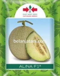 Melon F1 Alina, Jual Melon Murah Alina, Alina F1 Terbaru, Belanja Tani